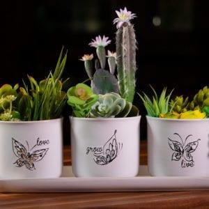 """Landry Butterfly Set of 4"""" Plants W/ Tray"""
