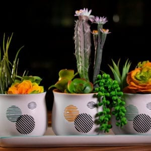 "Merry Round Set of 4"" Planters W/ Tray"