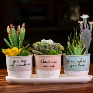 "Patricia Set of 4"" Planters w/ Tray"